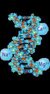 Triple DNA - Sodium, Magnesium, and Calcium salts of DNA.